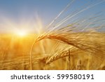 golden wheat close up on sun.... | Shutterstock . vector #599580191