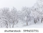View Of Snow Covered On Tree A...