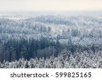 Winter Forest Aerial View...