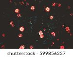 art photography colors. flowers ... | Shutterstock . vector #599856227