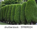 Neatly Trimmed Hedge