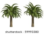 wild date palms isolated on... | Shutterstock . vector #59993380