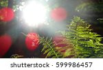 a fern in the sunlight | Shutterstock . vector #599986457