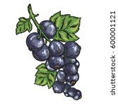 currant berry  fruit  leaf ... | Shutterstock .eps vector #600001121