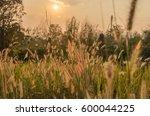 flowers grass field and sun set ... | Shutterstock . vector #600044225
