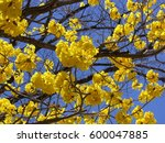 Yellow Flower Tree