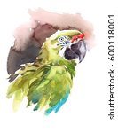 Watercolor Bird Green Macaw...