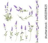 set of lavender flowers... | Shutterstock . vector #600209825