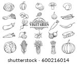 vector hand drawn vegetables... | Shutterstock .eps vector #600216014