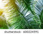 palm leaves with sun rays ... | Shutterstock . vector #600224591