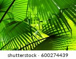 stripes of palm leaves texture  ... | Shutterstock . vector #600274439
