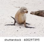 sea lion | Shutterstock . vector #600297395