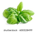 basil leaves isolated close up... | Shutterstock . vector #600328499