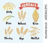 vector illustration of cereal...   Shutterstock .eps vector #600361391