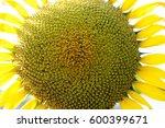 sunflower isolated on white... | Shutterstock . vector #600399671