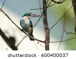 collared kingfisher  one the... | Shutterstock . vector #600400037