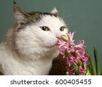 Cat Sniff Pink Hyacinth Flower...