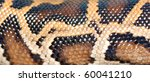 boa snake pattern background macro - stock photo