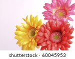 gerber flowers isolated on... | Shutterstock . vector #60045953
