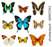 Stock photo collection of colored butterflies isolated on white 60047341