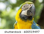 Closeup Parrot Bird Blue And...