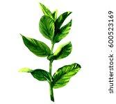 branch of fresh raw green mint... | Shutterstock . vector #600523169