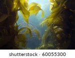 Luscious Green Kelp Forest...