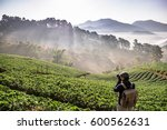 chaing mai  thailand   february ... | Shutterstock . vector #600562631