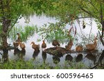 Small photo of ducks in a row