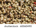 A Background Of Periwinkles For ...
