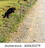 jumping black cat | Shutterstock . vector #600620279