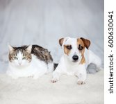 dog and cat. friends at home.... | Shutterstock . vector #600630041