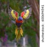 Rainbow Lori.   Kalideascope