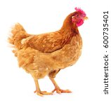 young brown hen isolated on... | Shutterstock . vector #600735401