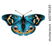 butterfly with open wings top...