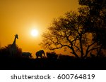golden sunset in south africa... | Shutterstock . vector #600764819