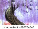 Tree Of Wisteria To Be Able To...