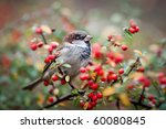 Sparrow On A Branch With Red...
