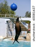Acrobatic Seal Jump On A Water...