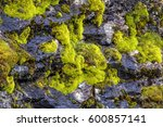 Close Up Of Moss On A Rock Wal...
