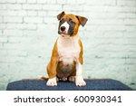 american staffordshire terrier... | Shutterstock . vector #600930341