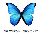 Stock photo butterfly morpho didius 600974249
