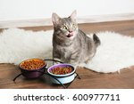 cute cat eating on floor at home | Shutterstock . vector #600977711