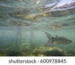 mediterranean underwater... | Shutterstock . vector #600978845