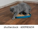 Cute Grey Cat With Litter Box...