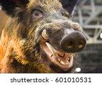 Head Of A Wild Boar With Fangs