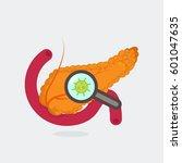 pancreas vector illustration   Shutterstock .eps vector #601047635