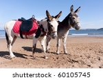 Two Donkeys Waiting For A...