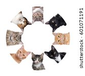 group of  different breeds cats ... | Shutterstock . vector #601071191