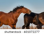 bay horse bite outdoor | Shutterstock . vector #601072277